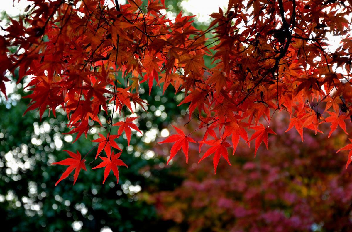 猪名川パークタウン水彩の経の紅葉