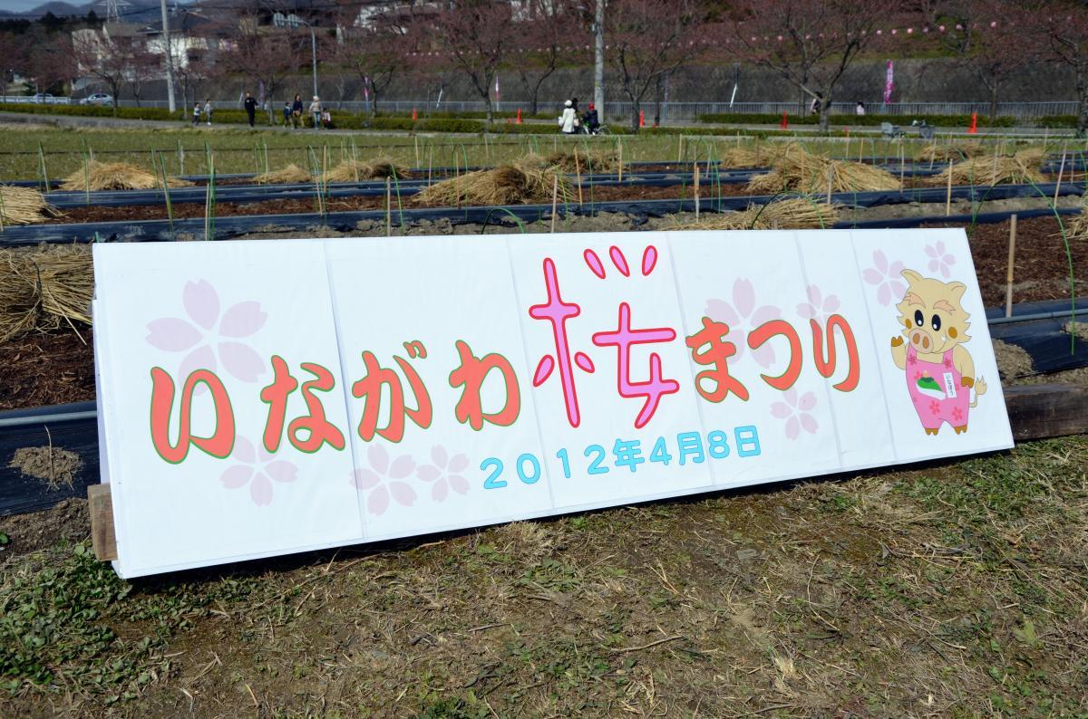 猪名川桜まつり03