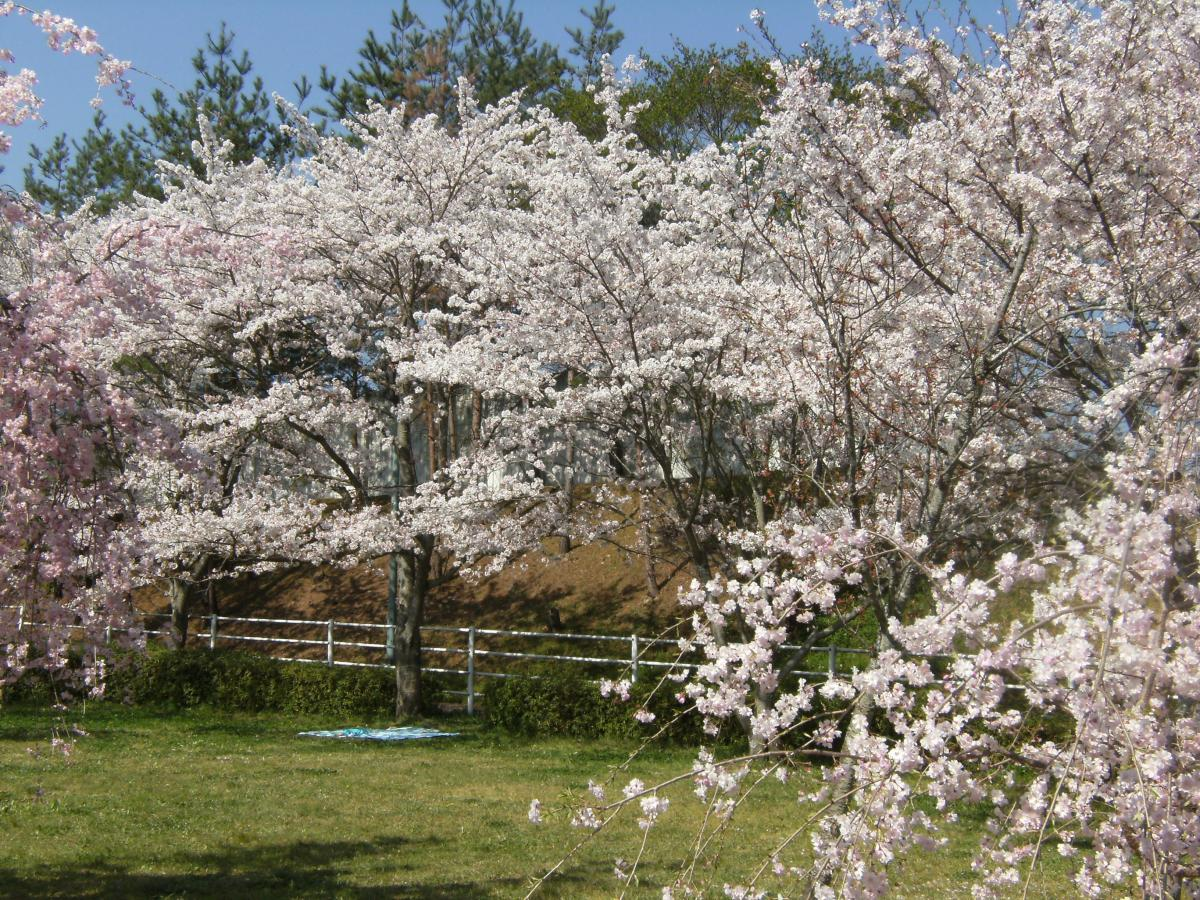 猪名川桜池公園07