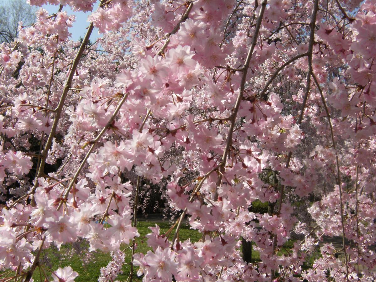 猪名川桜池公園09